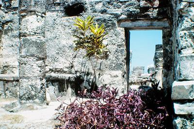 Ruins, Cozemel Mexico